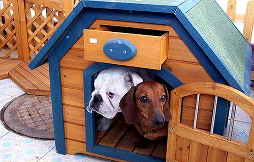 Pros & cons of a Dog-Friendly balcony