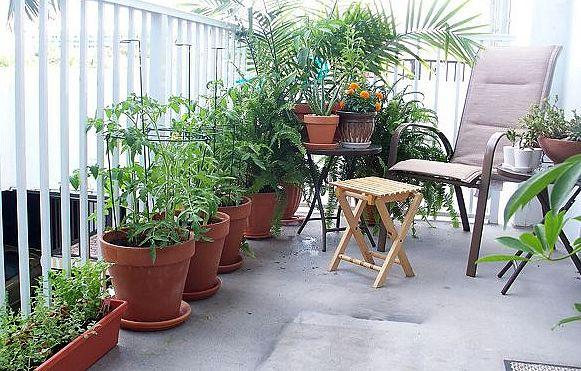 Main Aspects Of Decorating The Balcony With Plants