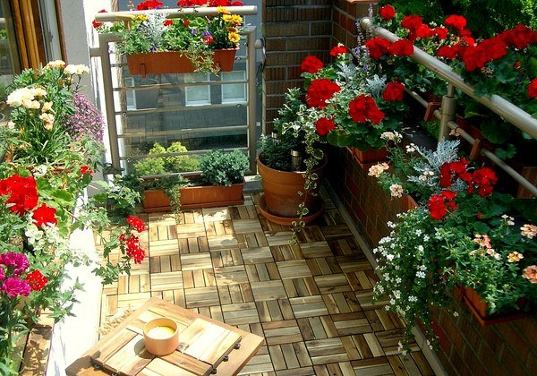 Indoor or Outdoor plants on a balcony